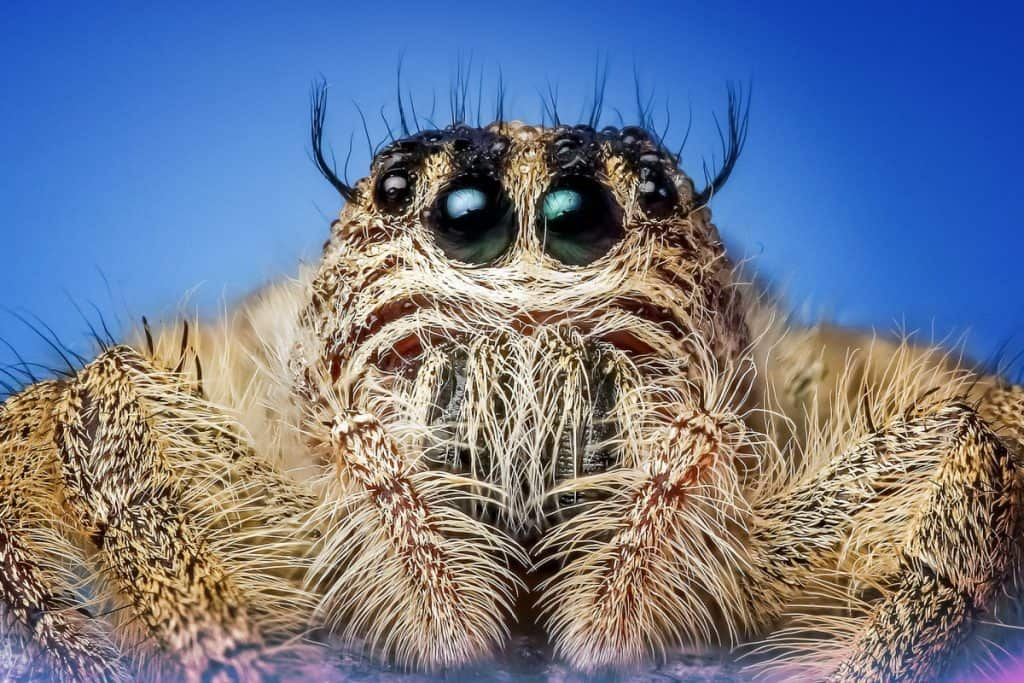 can spiders see in the dark