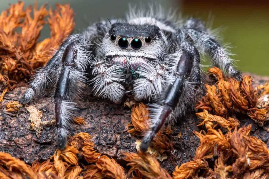 do tarantulas like being stroked