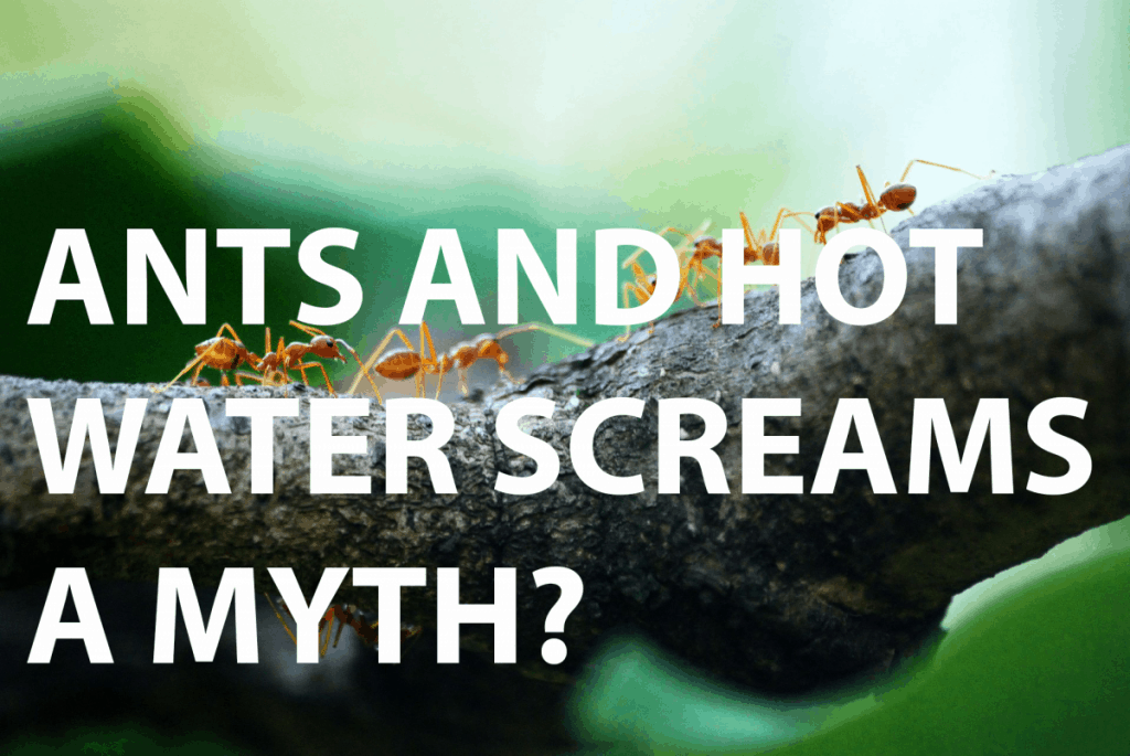 Is it normal for ants to scream when I use water to get rid of them?