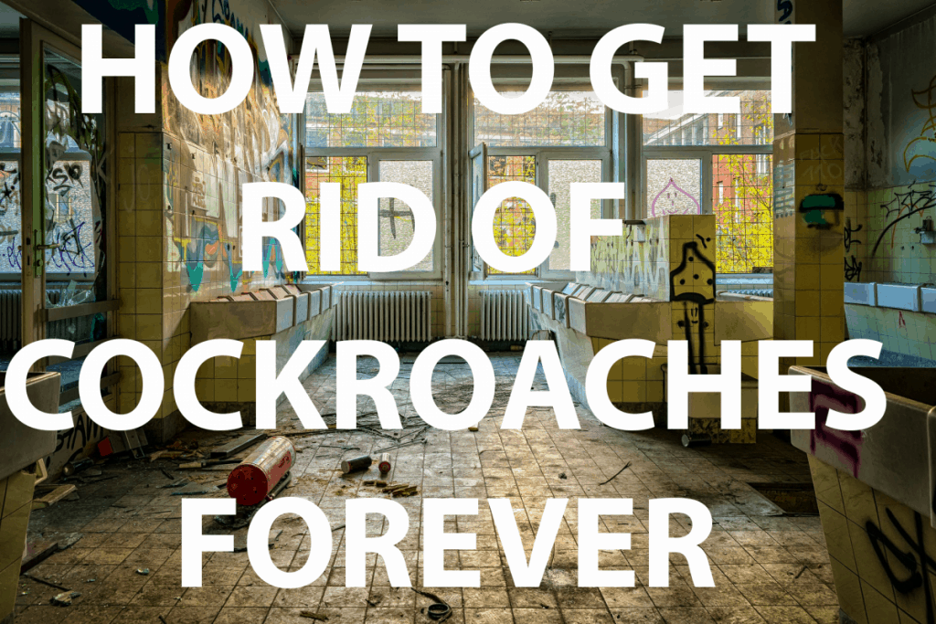 HOW TO GET RID OF ROACHES FOREVER