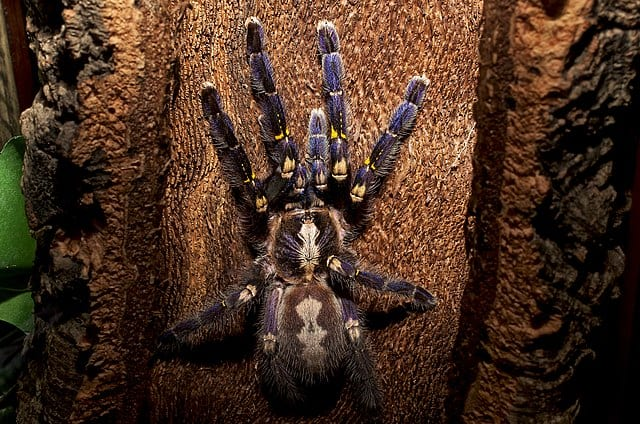 By B a y L e e ' s 8 Legged Art - https://www.flickr.com/photos/thebaylees/12737635603/in/album-72157641441855363/, CC BY-SA 2.0, https://commons.wikimedia.org/w/index.php?curid=77734941